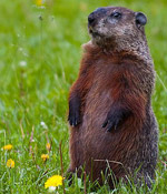 Groundhog and 2-Sample t-test