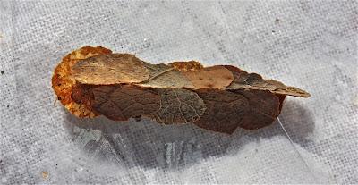 casemaker leaf